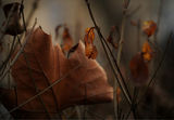 Every Autumn has a Story ; comments:20
