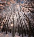 Из горите... ; comments:43