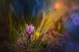 Пролетно.... ; comments:18
