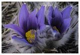 Пролет идва! ; Comments:6