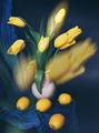 Пролетен eтюд ; comments:33