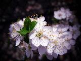 Пролетта дойде... ; comments:20