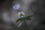 Първа пролет! ; comments:6
