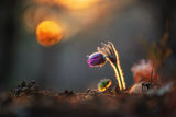 Съзерцавайки слънцето... ; comments:40