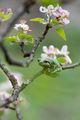 Един жабешки поглед на пролетта ; comments:13