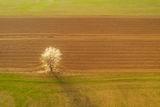 Пролетна утрин ; Comments:11