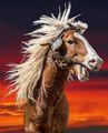 Лудия кон ; comments:14