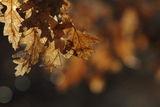 Предпролетно ; Comments:10