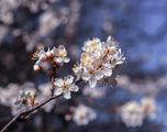Пролет ; Comments:26