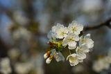 С ухание на пролет ! ;) ; comments:37