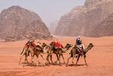 С GPS в пустинята ; comments:10