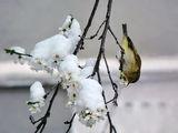Пролетна изненада... ; Comments:21