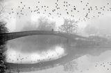 Пейзаж с мъгла и птици ; comments:68