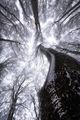 Дърветата шептят... ; comments:11