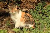 Котка фотомодел ; comments:3