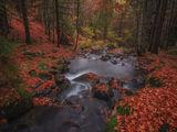 Спомени от Есента ; Comments:45
