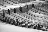 Черно и Бяло ; comments:41