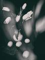 Пролетен eтюд ІІ ; comments:18