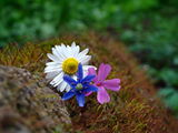 Пролетно... :) ; Comments:18