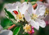 Пролетно-калинково с ябълков цвят ; comments:3