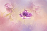 Цветница ; comments:7
