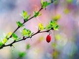 Пролетно... :) ; Comments:14