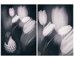 Пролетни етюди III & IV ; comments:20