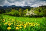 Пролетта на рамото ми кацна... ; Comments:10