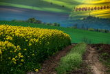 Пролетни импресии ;) ; comments:15