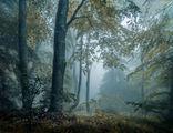 В гората ; comments:27