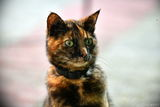 Сутрешен портрет на Мима, комшийката... ; comments:2