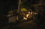 Възрастна жена прибира овцете си от паша ; comments:8