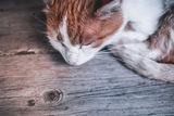 Котешки сън ; No comments