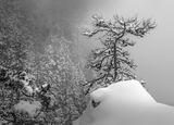 Дървото на желанията ! ; Comments:31