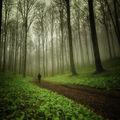 Пролетна гора ; comments:35