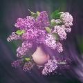 Пролет в изобилие ; comments:24