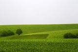 Зелено... ; Comments:18