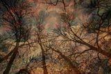 Омагьосаната гора ; comments:5