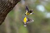 Битка във въздуха! ; comments:24