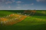 Пролет в Моравия ; comments:9