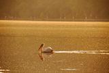 Езерото с пеликаните ; comments:10