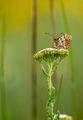 Пеперуден свят ; comments:7