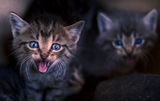 pussy cats ; Comments:3