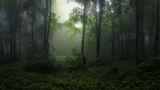 В Стара Планина ; comments:8