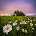 С мирис на пролет ; comments:28