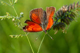 Пеперуда в оранжево ; Comments:8
