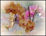 Орхидейно ; comments:25