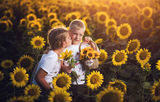 Sunflower kiss... ; comments:4