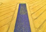 Добруджански килим ; comments:13