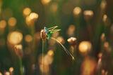 Слънчеви свещи ; Comments:28
